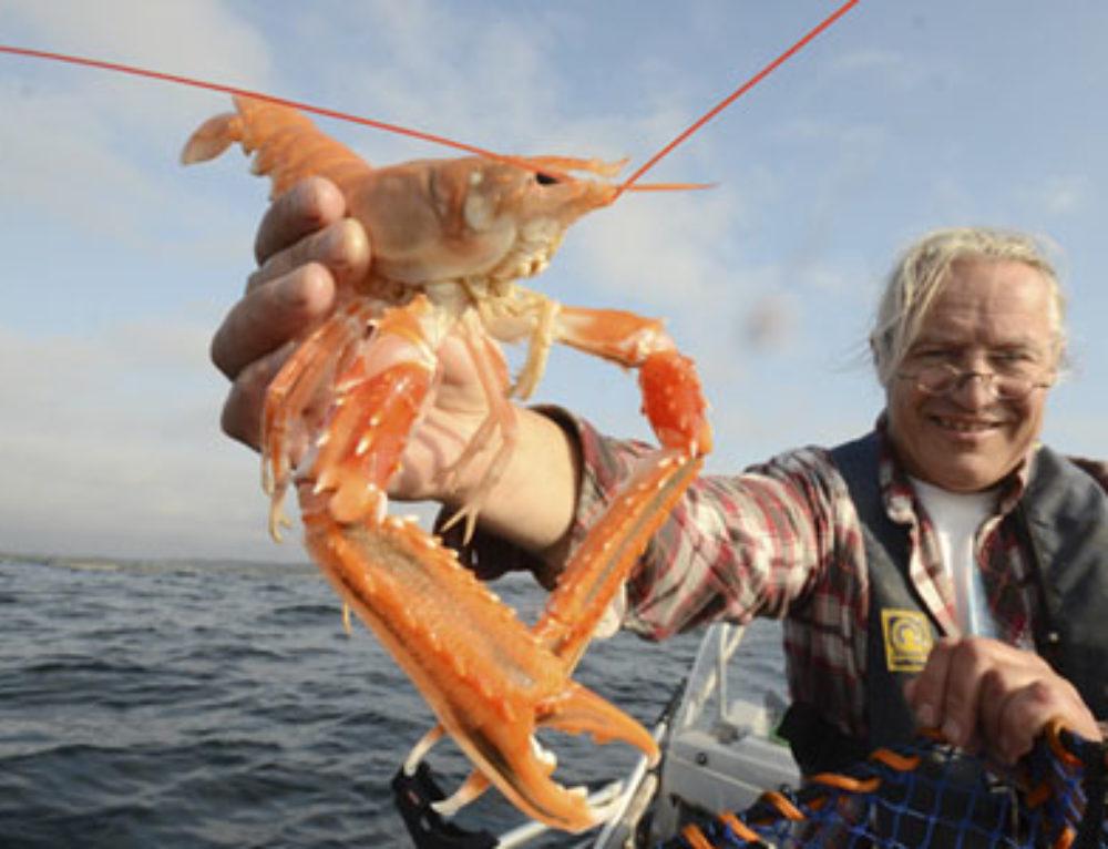 Teinefiske etter sjøkreps